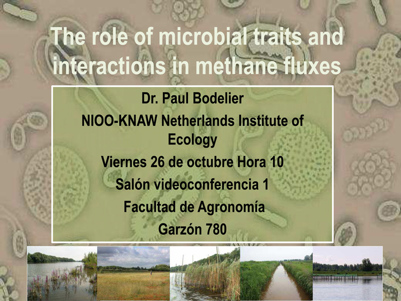 The role of microbial traits and interactions in 2 1